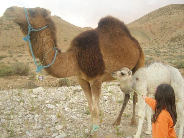 Tunesien Adventure Offroad 2007